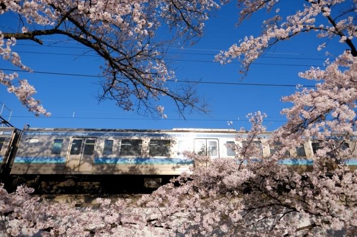 櫻鉄 勝沼_f0050534_15081412.jpg