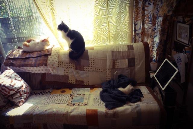 子猫がうちにやって来た    その顛末_d0101846_05323010.jpg