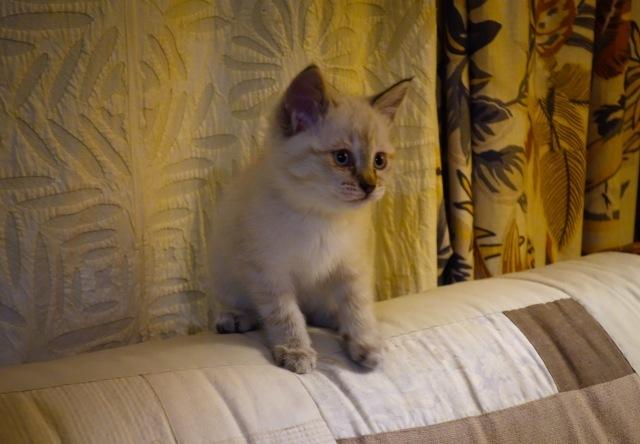 子猫がうちにやって来た    その顛末_d0101846_05473845.jpg