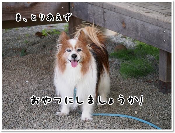 d0013149_00315011.jpg