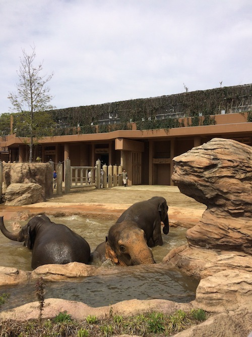 東山動物園 その1_f0324766_14320449.jpg