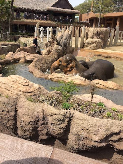 東山動物園 その1_f0324766_14320522.jpg