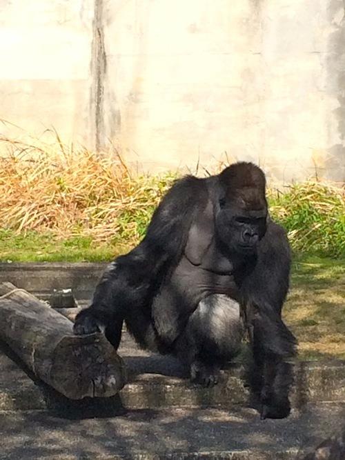 東山動物園 その2_f0324766_14320622.jpg