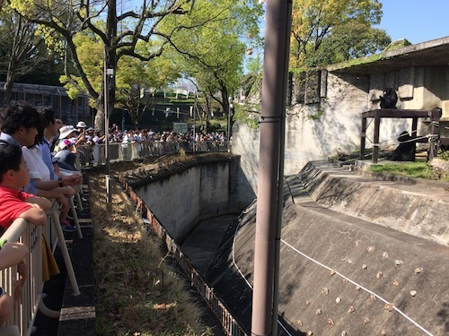 東山動物園 その2_f0324766_16111543.jpg