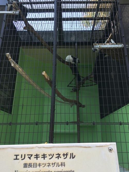 東山動物園 その2_f0324766_16111865.jpg