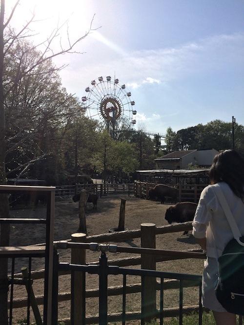 東山動物園 その2_f0324766_16121402.jpg