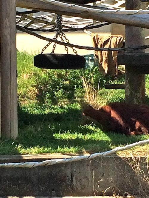 東山動物園 その2_f0324766_16201500.jpg