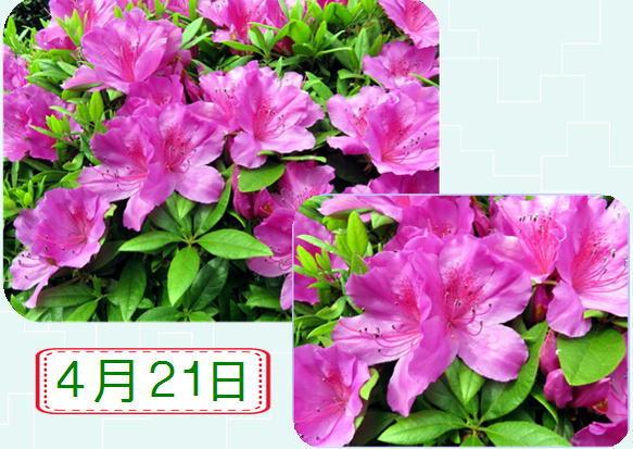 f0003174_14073055.jpg