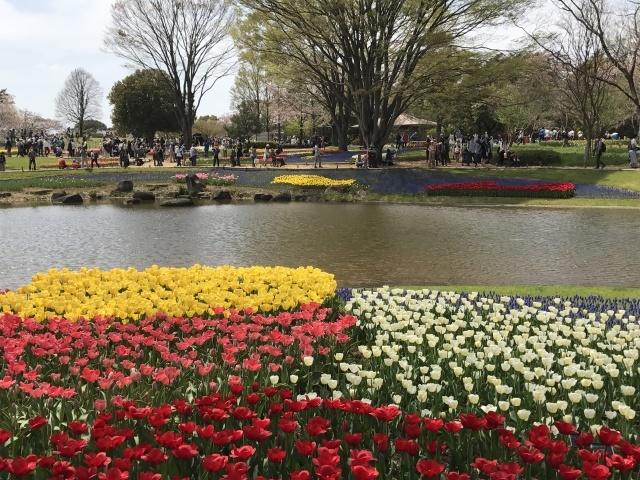 チューリップ @昭和記念公園_a0180279_18154362.jpg
