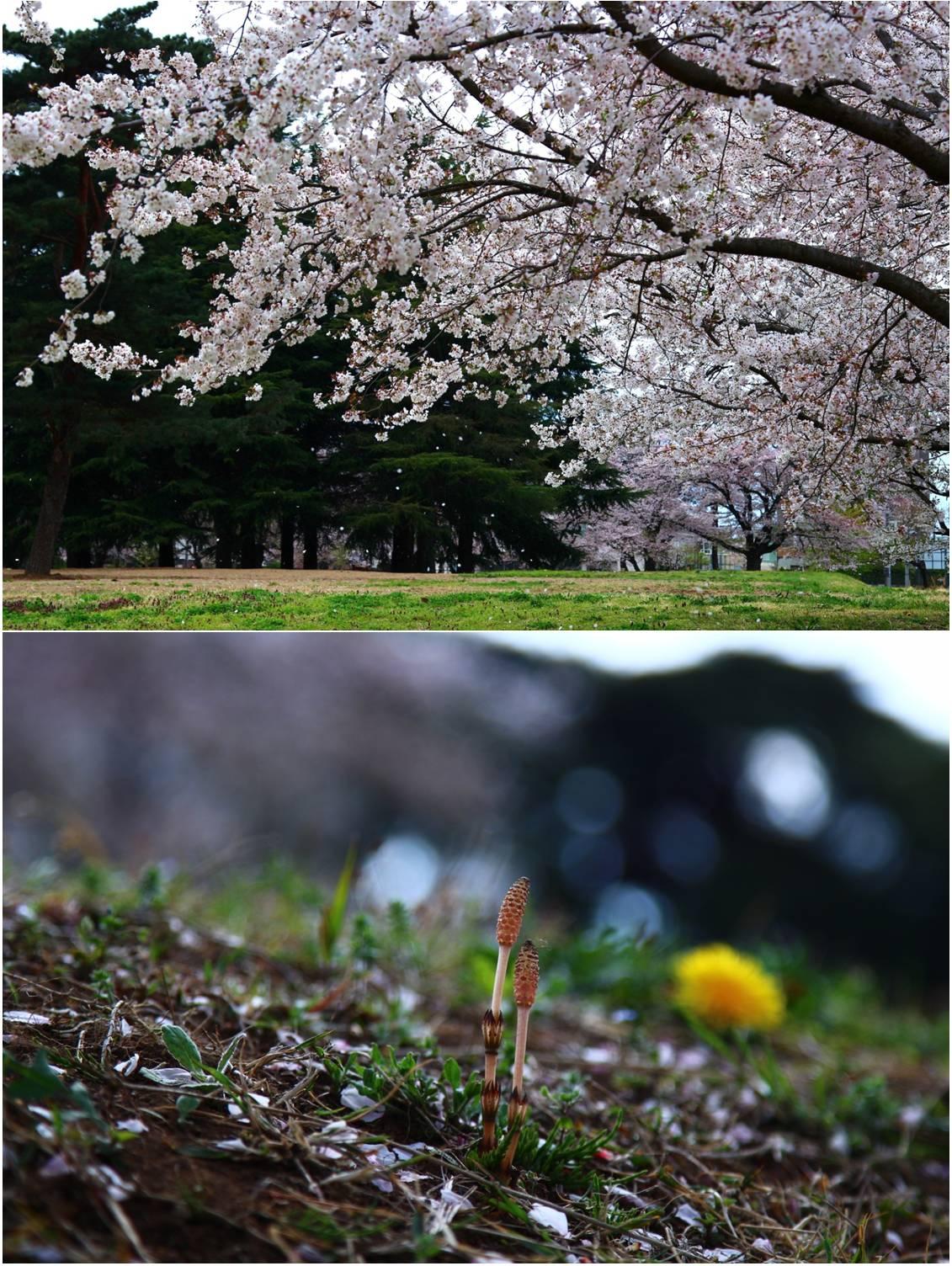 イースターサンデーお花見ピクニック_a0107981_103427.jpg