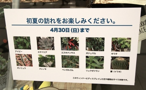 ◆『NATURE IN THE CITY』・・阪急百貨店のショーウインドウ_e0154682_11233561.jpg
