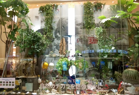 ◆『NATURE IN THE CITY』・・阪急百貨店のショーウインドウ_e0154682_12264880.jpg