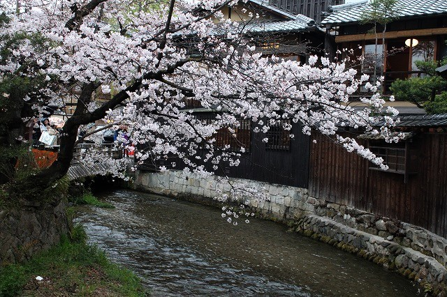 祇園白川の桜 2017 春_f0374092_21372617.jpg