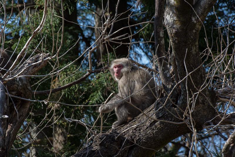 記憶の残像 2017年 猿がいた  東京都奥多摩町 _f0215695_18285237.jpg