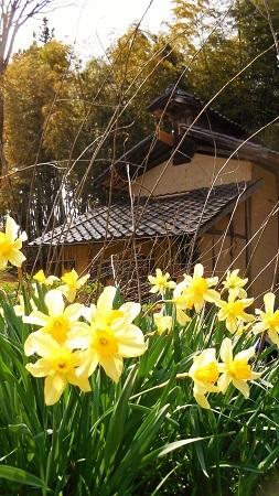 春の木工小屋 2017.04.21_c0213599_21582393.jpg