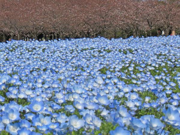 花見にて〜_a0047700_1185727.jpg