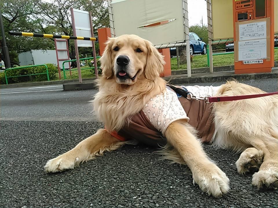 【犬】不動の構え?_f0141609_15243963.jpg