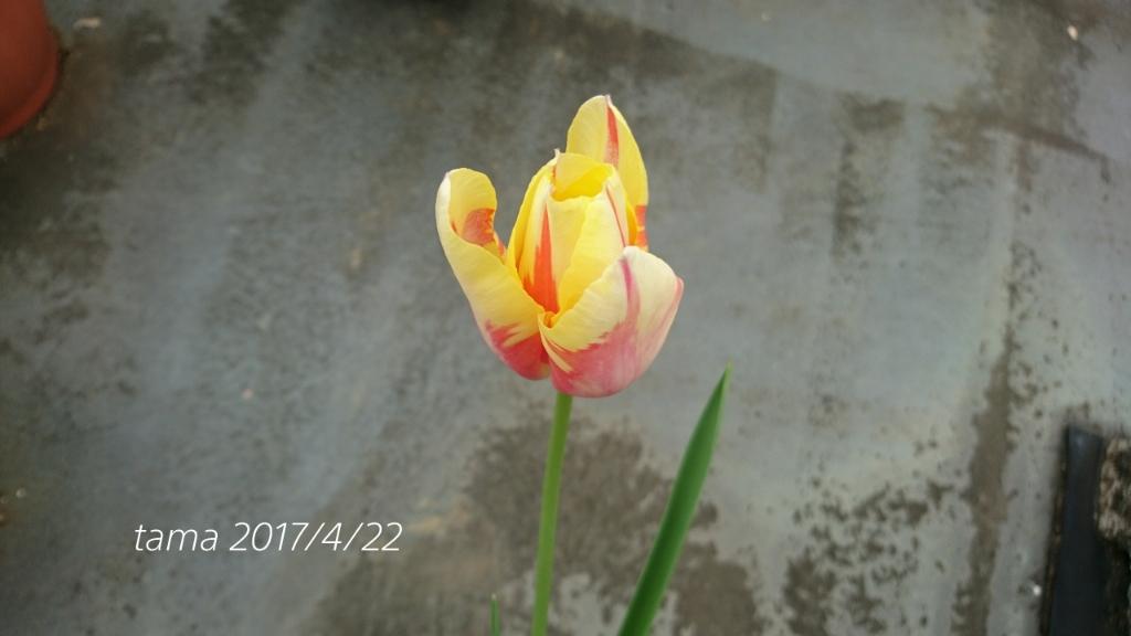 f0339422_08445150.jpg