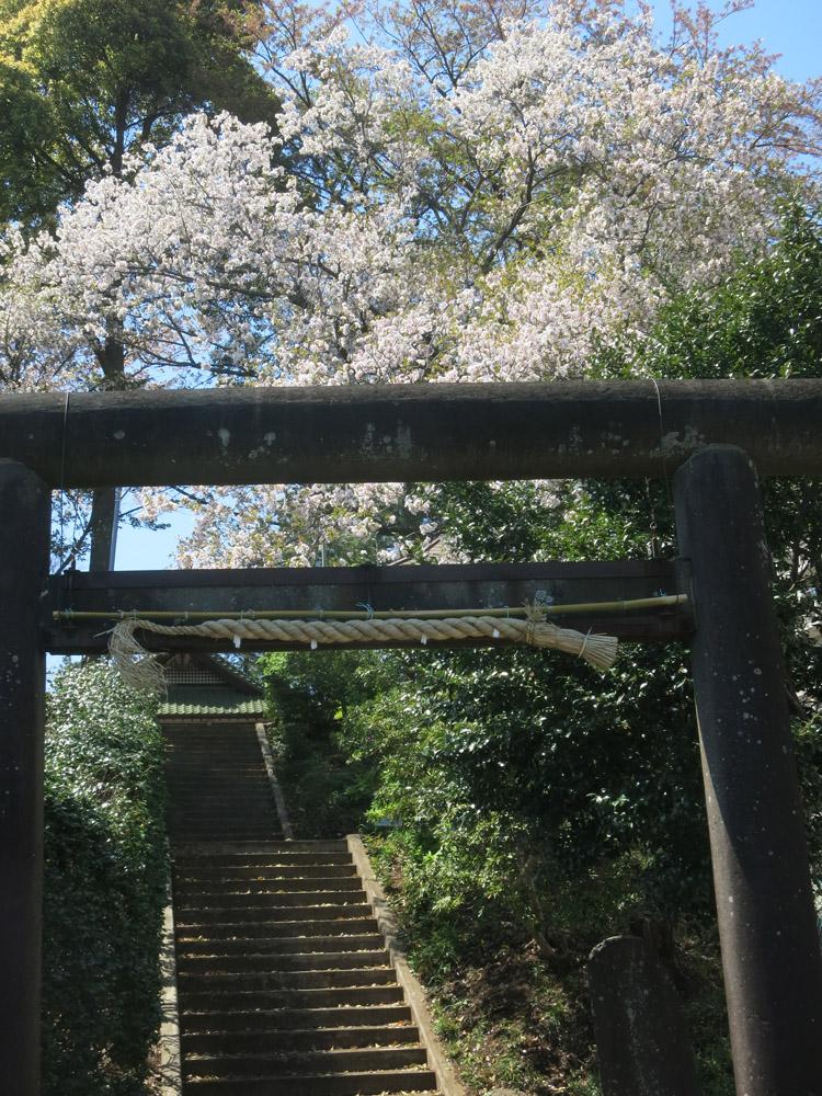 身近な桜など、今は!_e0367330_18154911.jpg