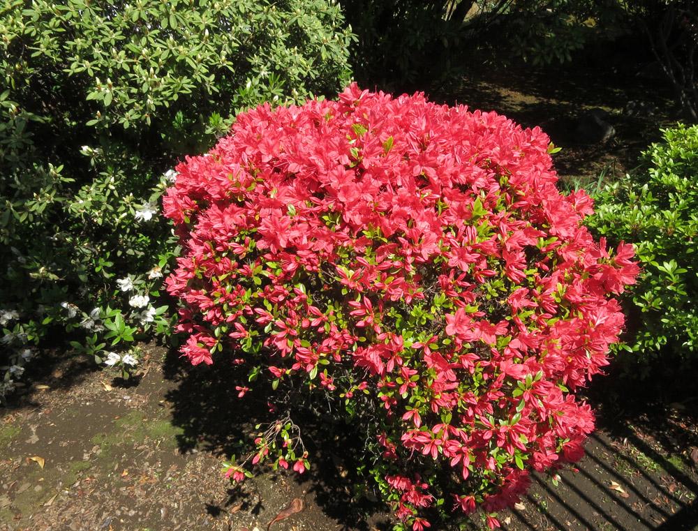 身近な桜など、今は!_e0367330_18194963.jpg