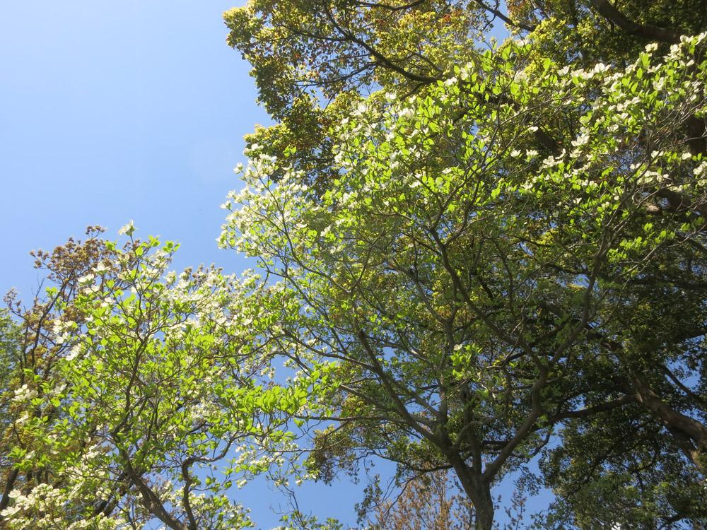 身近な桜など、今は!_e0367330_18204074.jpg
