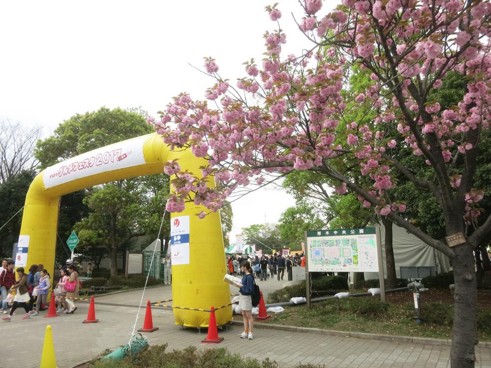 身近な桜など、今は!_e0367330_18323645.jpg