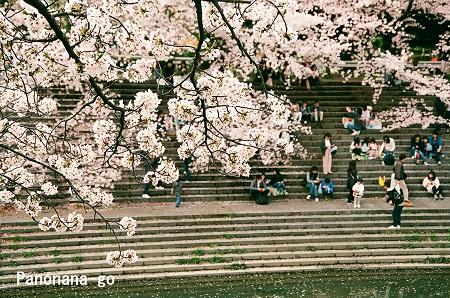 桜の頃を過ぎても。_c0185241_331187.jpg