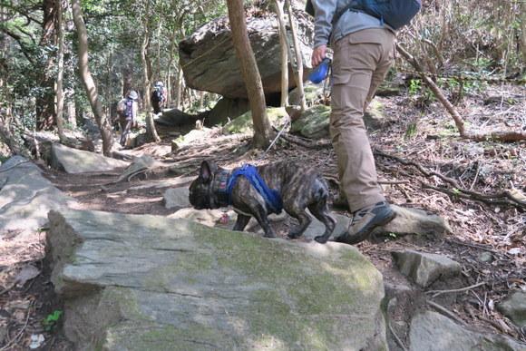 犬と一緒に山登り・宝篋山/茨城県_e0234741_22150225.jpg