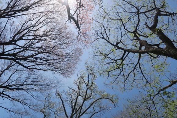 犬と一緒に山登り・宝篋山/茨城県_e0234741_22150282.jpg