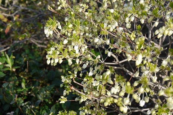 春、春、春花を Ⅱ_a0098746_14575335.jpg