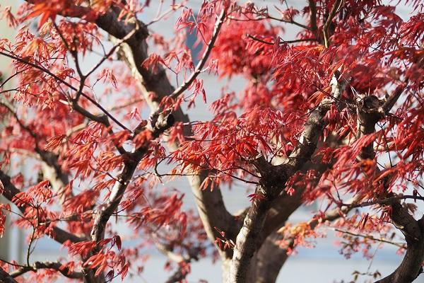 春、春、春花を Ⅱ_a0098746_14581290.jpg