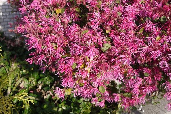 春、春、春花を Ⅱ_a0098746_14585016.jpg