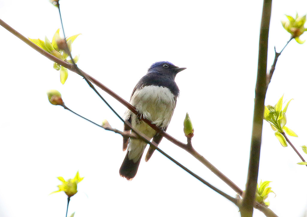 高原の夏鳥たち_d0313867_14262559.jpg