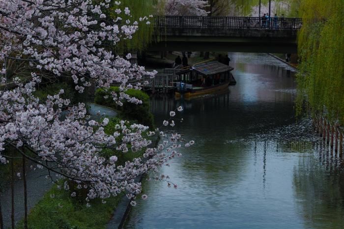 桜  2017  伏見 中書島界隈_f0021869_02572360.jpg