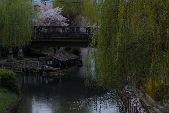 桜  2017  伏見 中書島界隈_f0021869_02574675.jpg