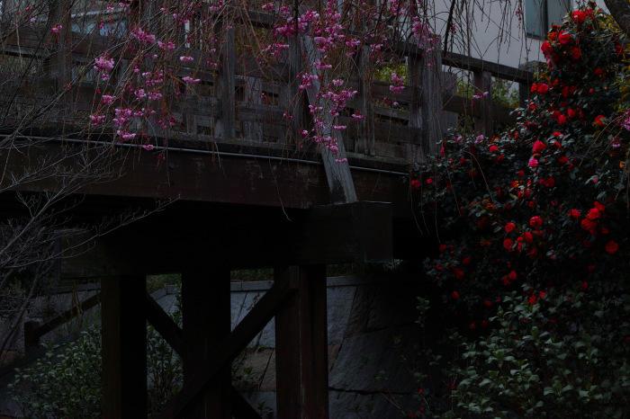 桜  2017  伏見 中書島界隈_f0021869_02582011.jpg