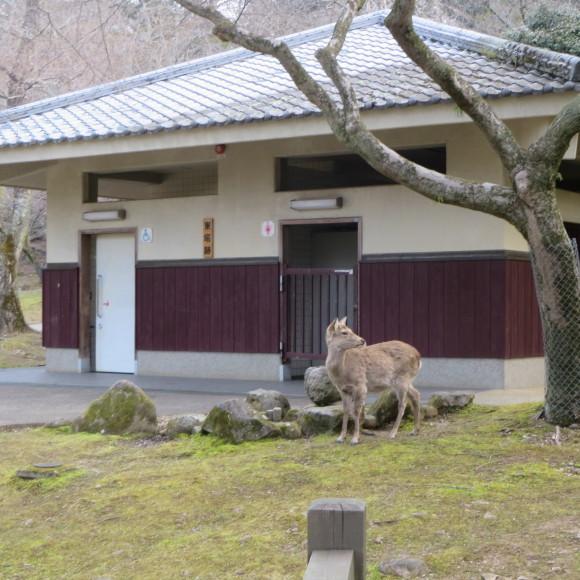 東大寺の思い出フォトグラフ_c0001670_14185660.jpg