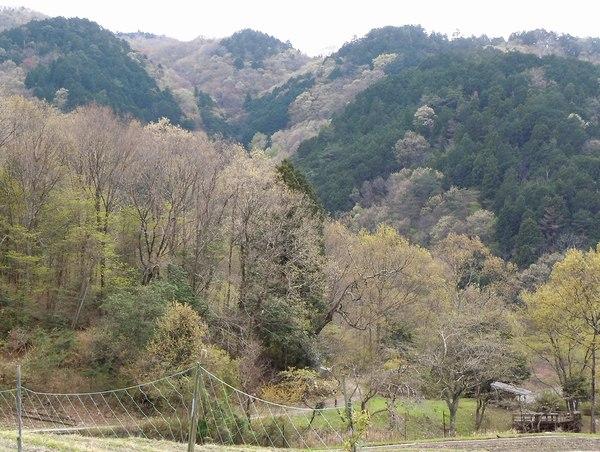 新緑の里山を歩く_b0102572_10231989.jpg