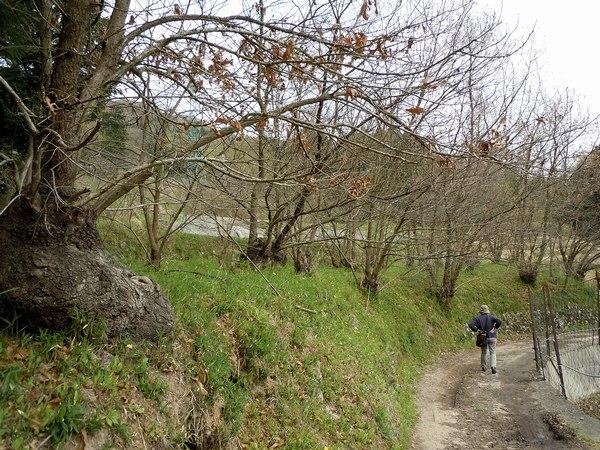 新緑の里山を歩く_b0102572_10234424.jpg