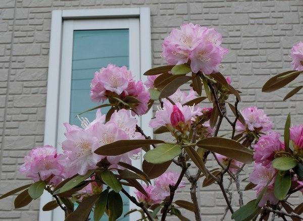木靴と花のエントランス ~ 花と家と生活を楽しむ人たち ~_b0102572_1031823.jpg