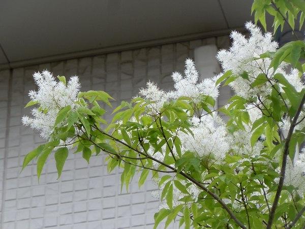 木靴と花のエントランス ~ 花と家と生活を楽しむ人たち ~_b0102572_10345629.jpg