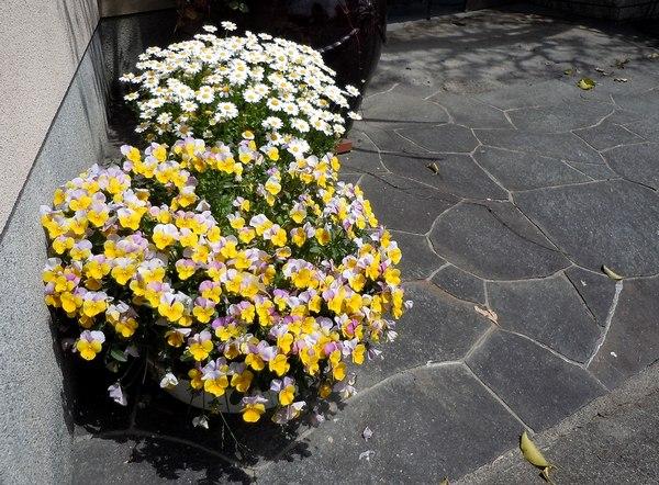 木靴と花のエントランス ~ 花と家と生活を楽しむ人たち ~_b0102572_135379.jpg