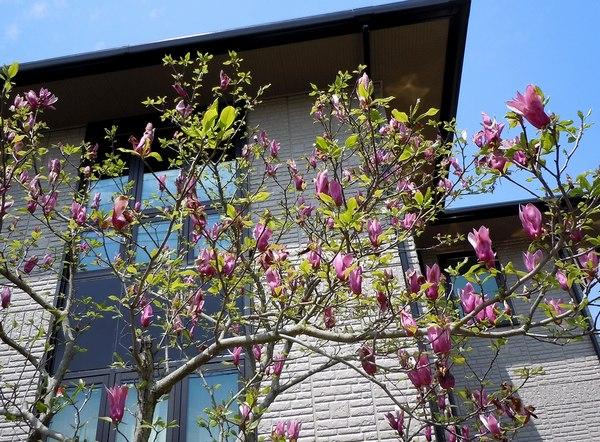 木靴と花のエントランス ~ 花と家と生活を楽しむ人たち ~_b0102572_135471.jpg