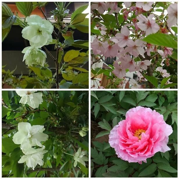 お散歩日和&春ですね♪_a0077673_22531549.jpg