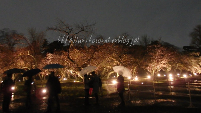 京の春*夜桜_b0324291_00011832.jpg