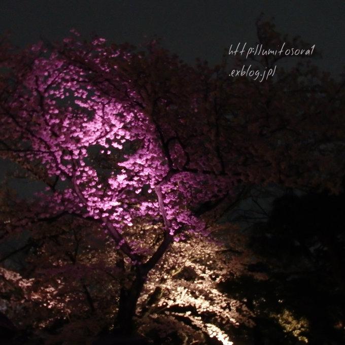 京の春*夜桜_b0324291_00012092.jpg