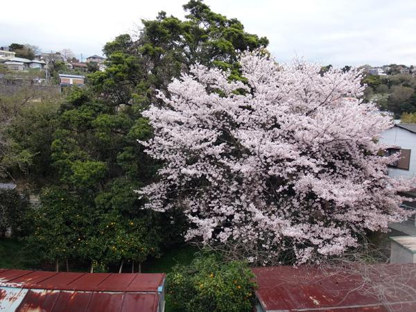 春風に誘われて真鶴へ~~2 _a0136293_16432961.jpg