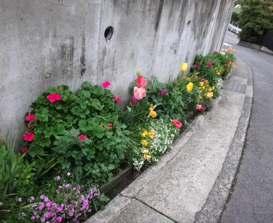 春風に誘われて真鶴へ~~2 _a0136293_1762881.jpg