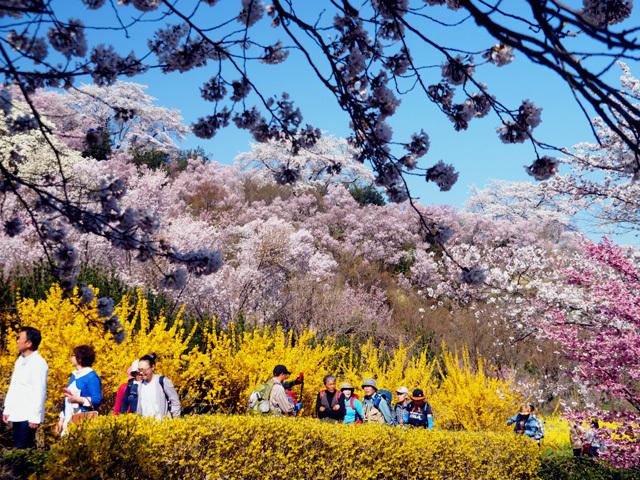 花見山公園_d0358793_01503921.jpg