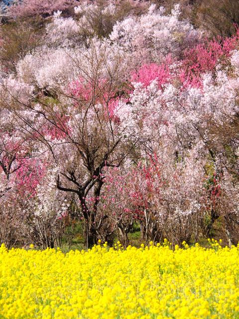 花見山公園_d0358793_01554663.jpg